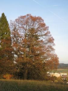 Baum im herbstlichen Gewandt